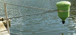 Swivel Arm fish feeding